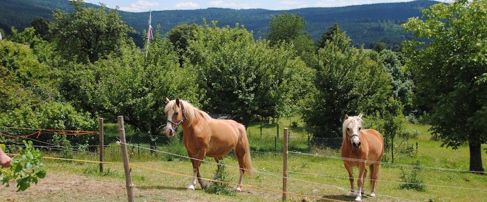 Pferde-schiesslhof